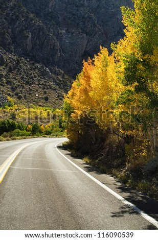 a mountain road winds past golden aspen trees - stock photo