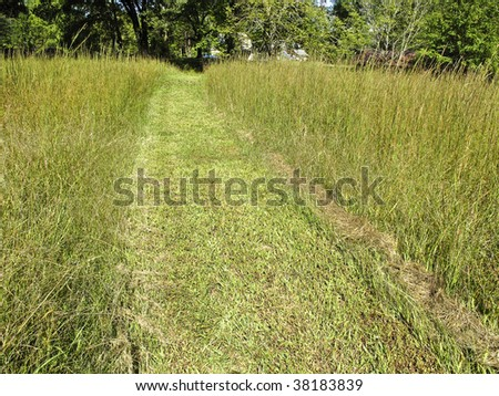 A mowed path through switch grass on a sunny day. - stock photo