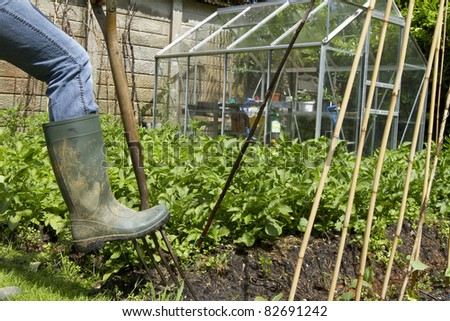 A muddy welly digging a fork on a private allotment vegetable garden. - stock photo