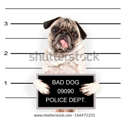 a mugshot of a bad dog - stock photo