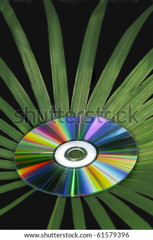 A multicolored cd with palm leaves branching out of it. - stock photo