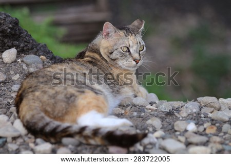 A Multicolored Feral Cat Enjoying the Sun on a Warm Day