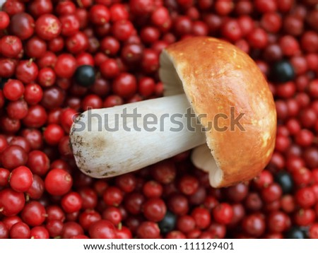 A mushroom and cranberries - stock photo