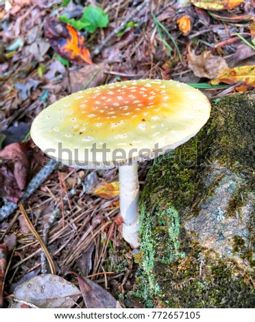 A mushroom growing next to a rock covered in moss with colorful fall leaves.