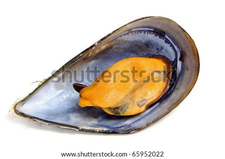 a mussel in shell ioslated on a white background - stock photo