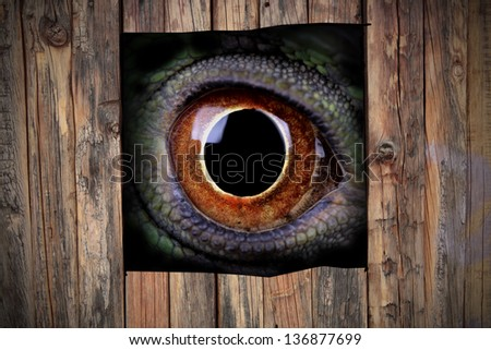 a mysterious animal eye looking through a hole in a wooden fence