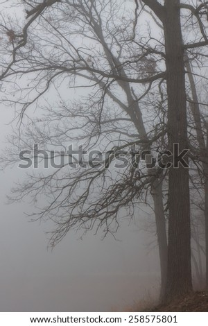 A mysterious fog envelopes shoreline and its oak trees.  Like tentacles, the oak's branches welcome the spooky mist into its grasp. - stock photo