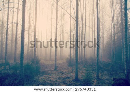 A mystical forest on a foggy morning. Image has a vintage effect applied.