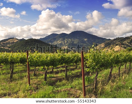 A Napa Valley vineyard in the Spring. - stock photo