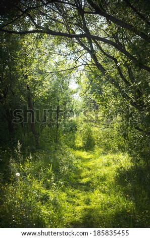 A narrow path in the fairy forest. Sunrise in summer forest. - stock photo