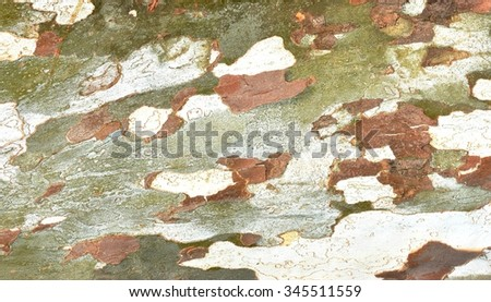A natural camouflage pattern of tree bark for abstract background. - stock photo