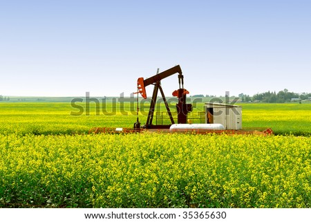 A natural gas pump jack in an Alberta Canola rapeseed field. - stock photo