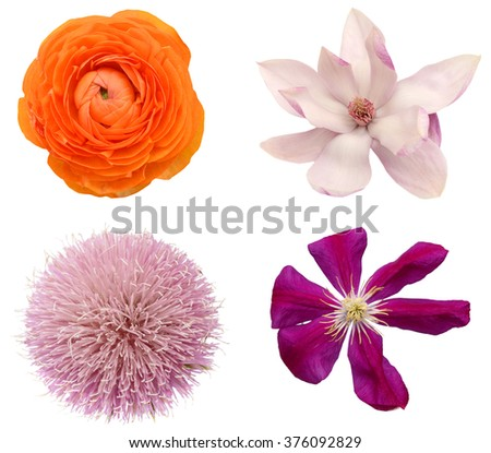 A natural spring flowers isolated white - stock photo