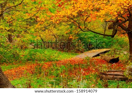 A nature trail wooden walkway leading into the woods. - stock photo