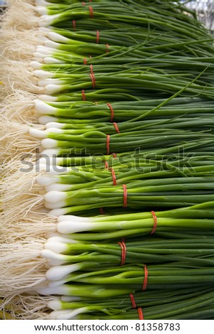 A neat row of spring onions bundled with red elastic ready for sale at the market. - stock photo