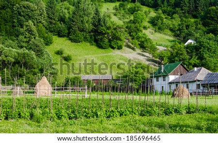 A neat vegetable garden with beds of various vegetable in Maramures Romania - stock photo