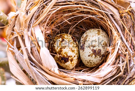 A nest filled with bird eggs in the branches of a tree. - stock photo