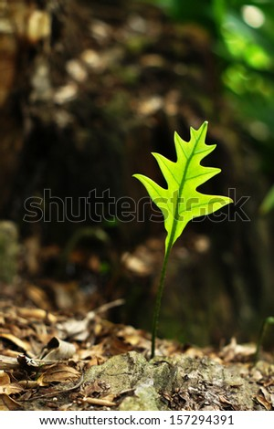 A new-born leaf on the ground - stock photo