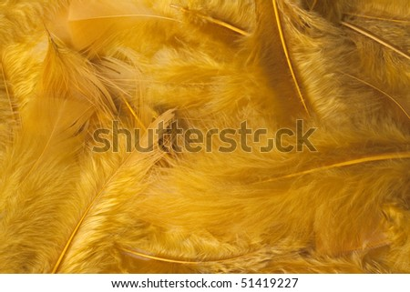 A nice backround of yellow feathers - stock photo