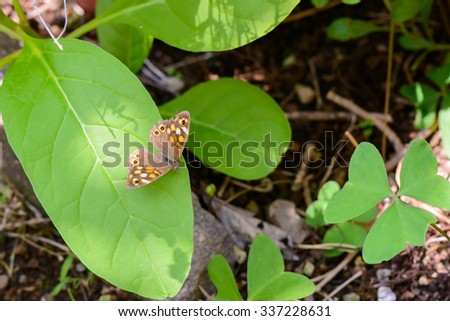 A nice butterfly resting on a leaf