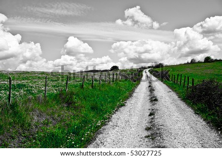 A nice landscape of a path in the middle of a green field of flowers. The only visible color is green. - stock photo