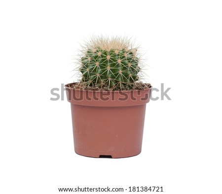 A nice specimen of cactus, isolated on white background