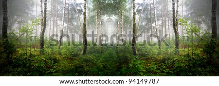 a north forest in fog. Latvia - stock photo