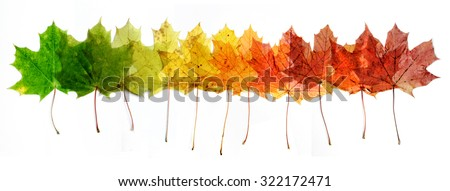 A number of colorful autumn leaves - stock photo
