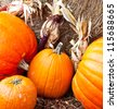 A number of pumpkins and gourds of various sizes at a pumpkin patch with Hay Bales and Indian Corn. - stock photo