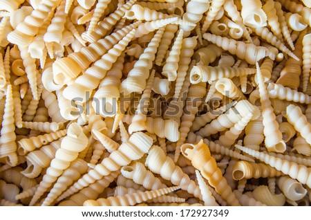 A number of  turritella auger seashells - stock photo