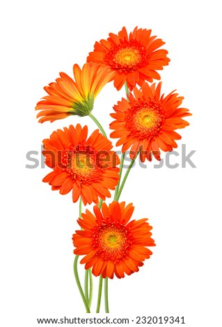 A orange yellow gerber flowers  - stock photo