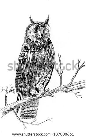 a owl on tree sketch illustration - stock photo