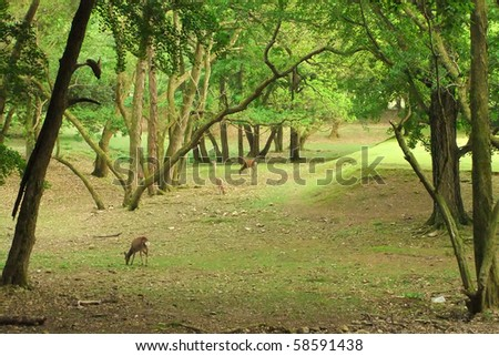 A pack of Sika deer in a green forest - stock photo