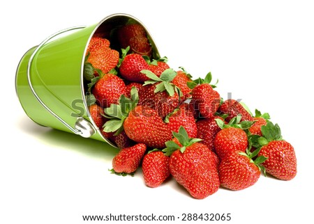 A pail full of freshly picked strawberries spilling out. - stock photo