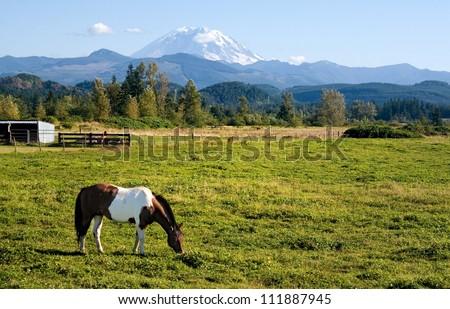 A paint horse enjoys the mild summer weather in a field near Mount Rainier, Washington. - stock photo