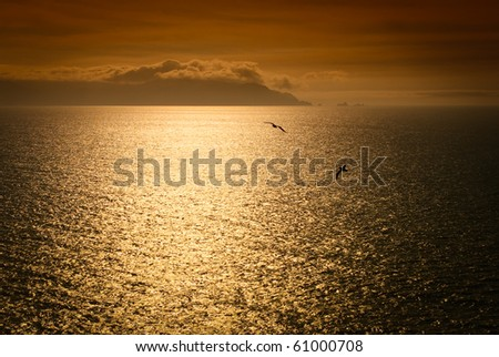 A pair of birds silhouettes flying over a golden ocean - stock photo