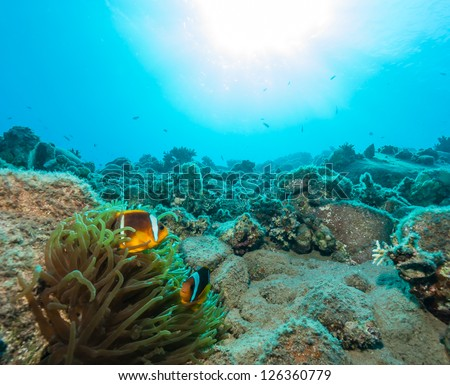 A pair of clownfish on a coral reef with bright sun behind them - stock photo