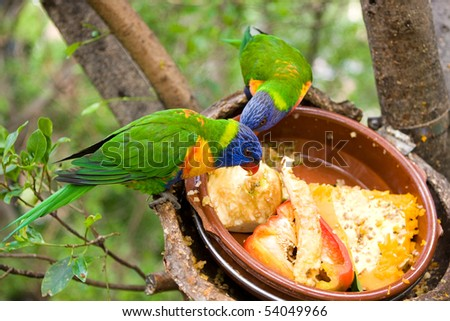 a pair of colourful parrots - stock photo