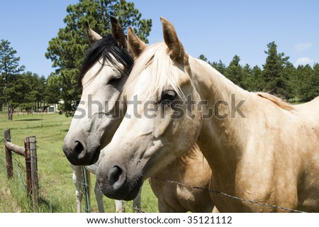 a pair of curious horses at the fence