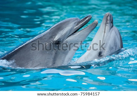 A pair of dolphins dancing together