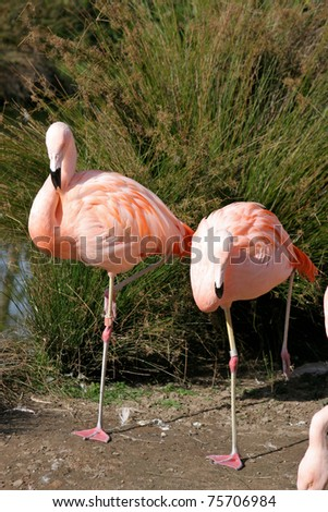 A pair of flamingos stands in the mud near some plants.