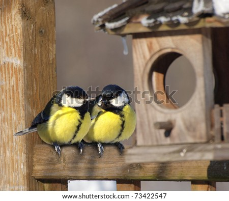 A pair of Great tit birds sitting next to nest box - stock photo