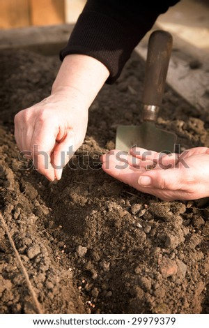 A pair of hands planting seeds in the ground. - stock photo