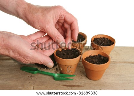 A pair of hands sowing seeds into individual terracotta plant pots - stock photo
