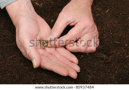 A pair of hands sowing seeds into soil