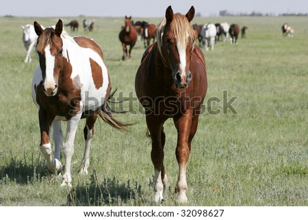 A pair of mares leads the rest of the herd on wide-open land in the American west (focus point on foreground horses). - stock photo