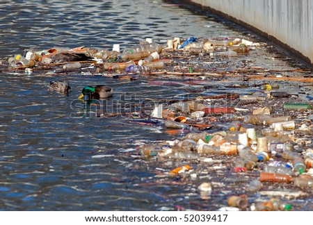 A pair of mated ducks foraging near recyclable garbage. - stock photo
