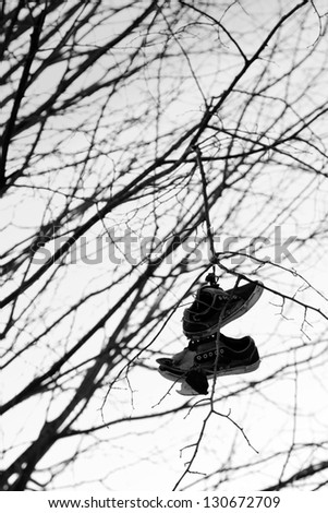 A pair of old shoes hung from a tree - stock photo