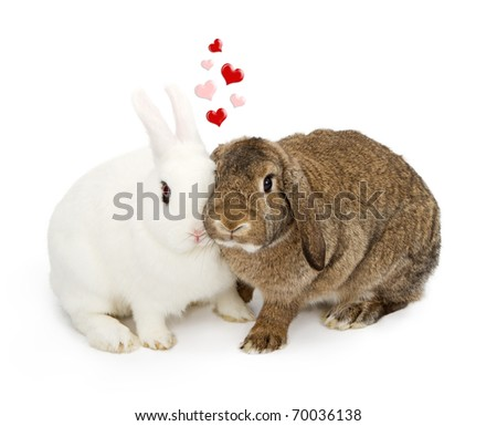 A pair of rabbits affectionately pressing their faces together with pink and red hearts floating above them - stock photo