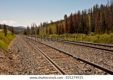 A pair of railroad tracks in a mountainous region of the west.  The result of a pine beetle infestation can be seen by the amount of dead pine trees alongside the railroad tracks.